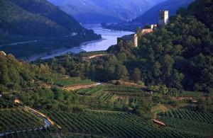 austrialower-austria-wachau-wine-landscape-autum-harvestdanube-river