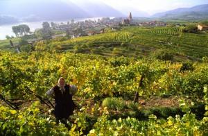 austrialower-austria-wachau-wine-landscape-autum-harvestdanube-river-2